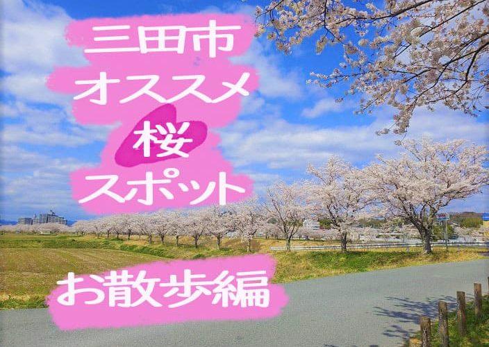 武庫川沿いの桜並木
